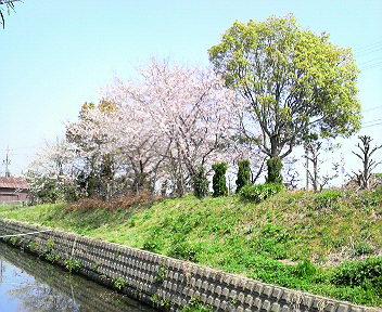 君と僕と、桜日和♪